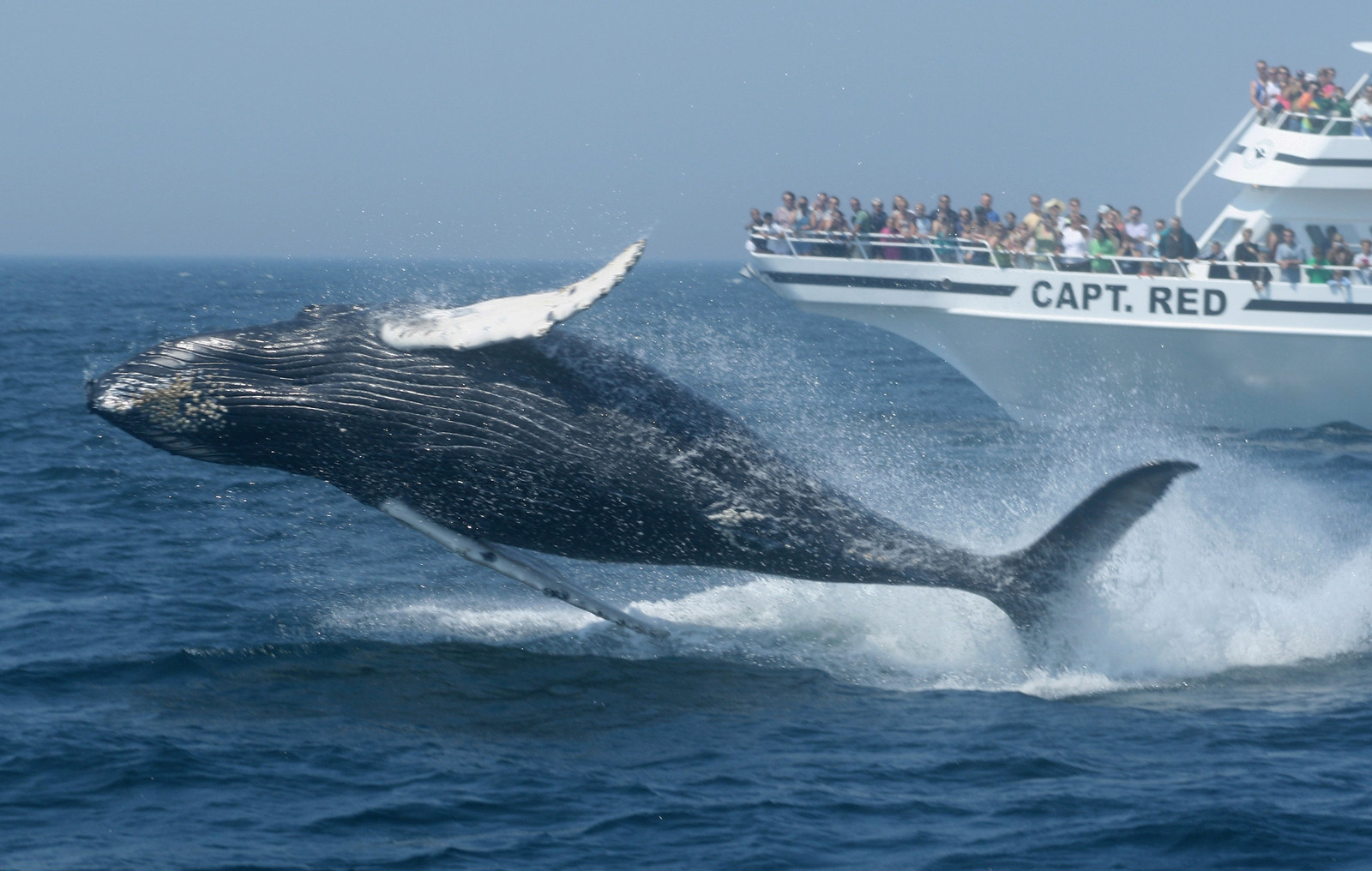 New England whale watching