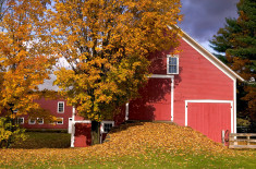 New England Fall Scene: Classic Vermont Barn with Foliage
