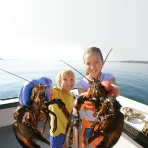 Lobsters in Maine